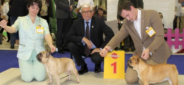12-13.12.2015 Международная выставка собак, СПб