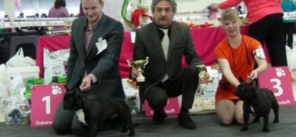 06.02.2016 SPECIALTY SHOW OF FRENCH BULLDOG CLUB. St-Petersburg