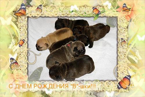 loonapix_1400245649607531818